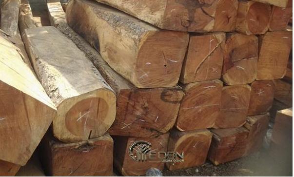 Thân cây gỗ gụ