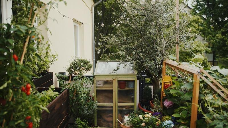 Thiết kế khu vườn rau xanh, tận dụng không gian
