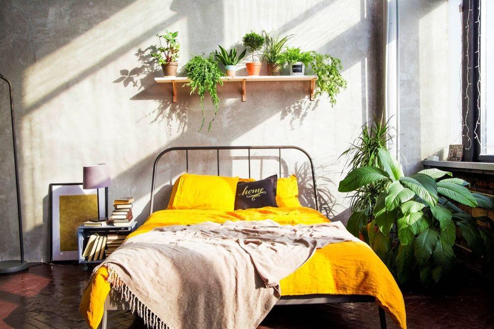 Không gian mới lạ với kệ handmade để cây cảnh phía trên giường