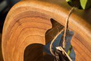 [GIẢI ĐÁP] Trả lời những câu hỏi liên quan đến Gỗ xoan đào MỚI NHẤT!